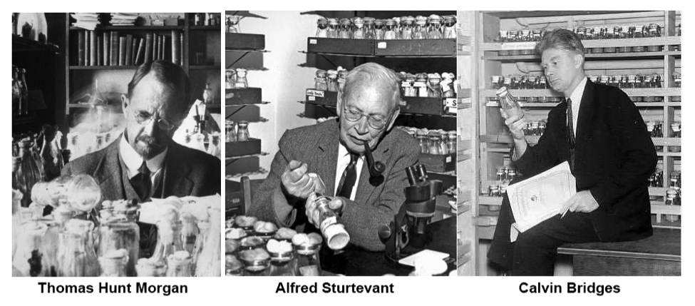 photos of Thomas H. Morgan, Alfred Sturtevant and Calvin Bridges